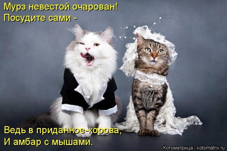Котоматрица: Мурз невестой очарован! Посудите сами - Ведь в приданное-корова, И амбар с мышами.