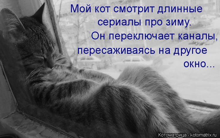 Котоматрица: Мой кот смотрит длинные сериалы про зиму.  Он переключает каналы, пересаживаясь на другое  окно...