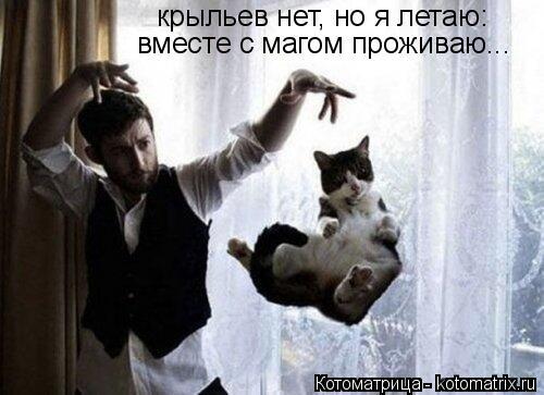 Котоматрица: крыльев нет, но я летаю: вместе с магом проживаю...