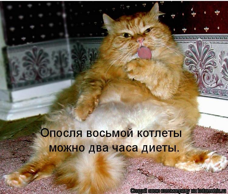 Котоматрица: Опосля восьмой котлеты можно два часа диеты.