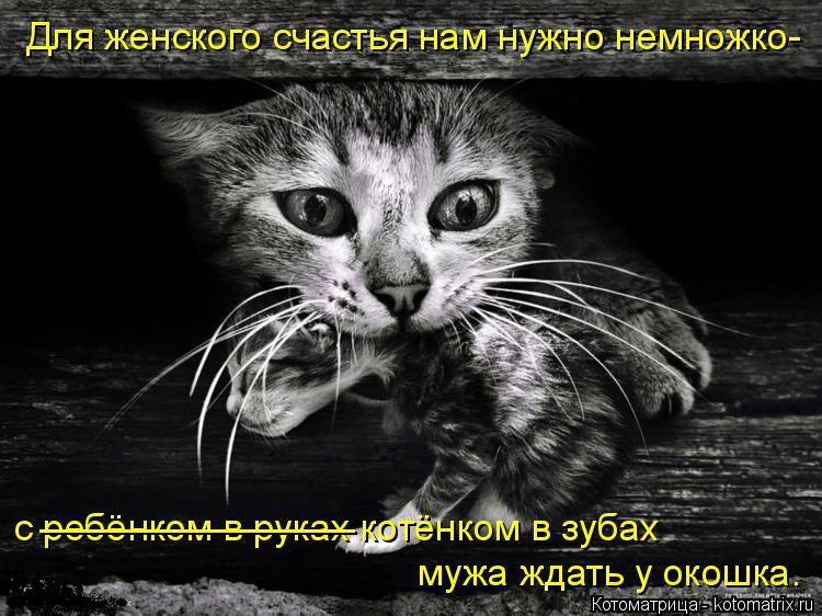 Котоматрица: Для женского счастья нам нужно немножко- с ребёнком в руках котёнком в зубах мужа ждать у окошка. _______________