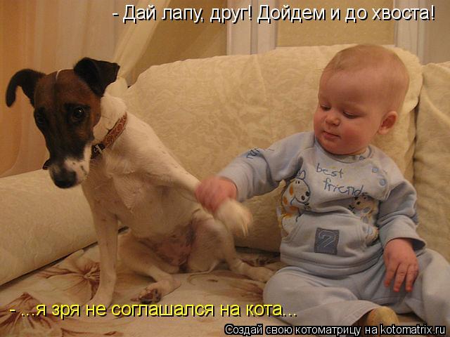 Котоматрица: - Дай лапу, друг! Дойдем и до хвоста! - ...я зря не соглашался на кота...