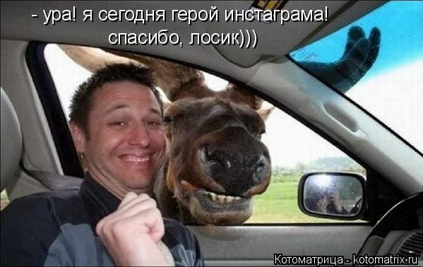 Котоматрица: - ура! я сегодня герой инстаграма! спасибо, лосик)))
