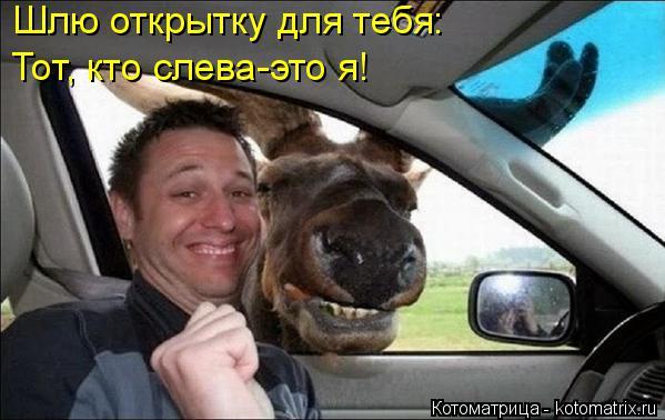 http://kotomatrix.ru/images/lolz/2014/11/14/kotomatritsa_xs.jpg