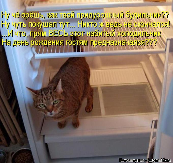 Котоматрица: Ну чё орёшь, как твой придурошный будильник?? Ну чуть покушал тут... Никто ж ведь не скончался! ...И что, прям ВЕСЬ этот набитый холодильник На д