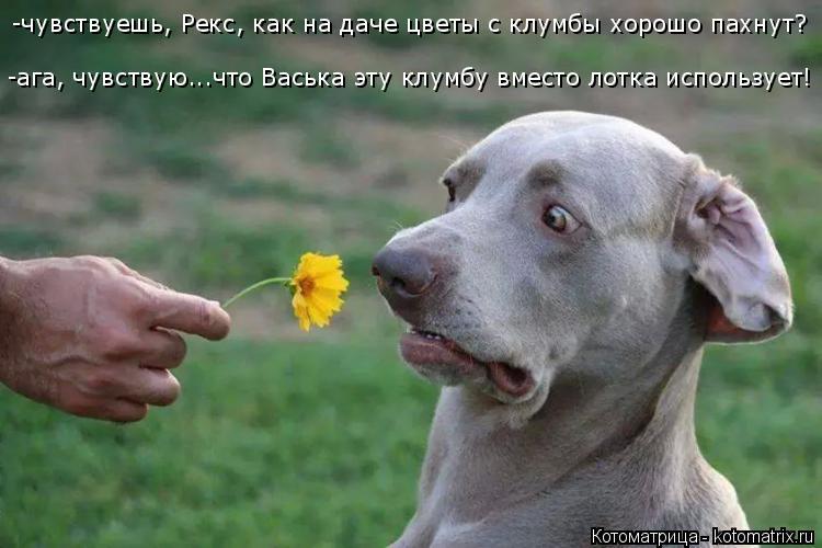 http://kotomatrix.ru/images/lolz/2014/11/15/kotomatritsa_5S.jpg
