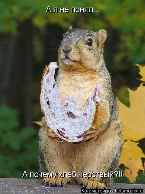 Котоматрица: А я не понял...  А почему хлеб черствый?!!!