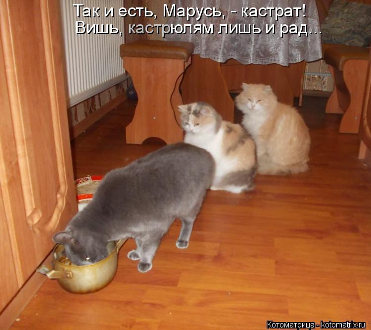 Котоматрица: Вишь,          юлям лишь и рад... кастр Так и есть, Марусь, - кастрат!