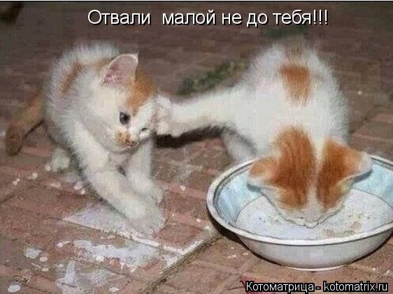 Котоматрица: Отвали  малой не до тебя!!!