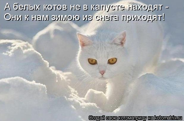 Котоматрица: А белых котов не в капусте находят - Они к нам зимою из снега приходят!