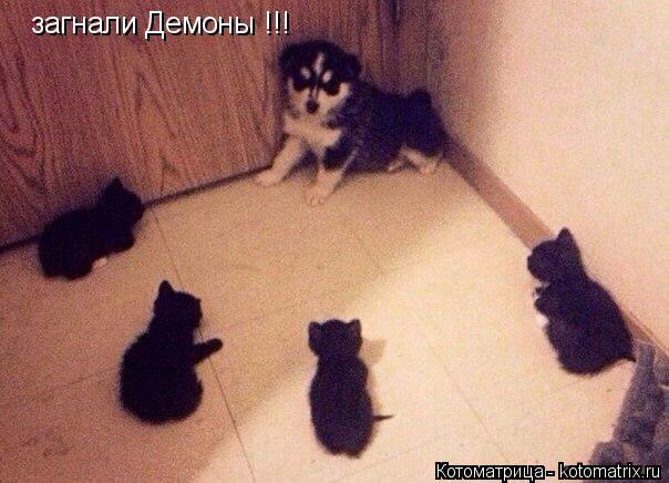 Котоматрица: загнали Демоны !!!