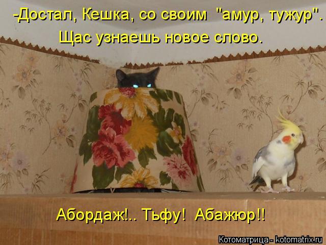 "Котоматрица: -Достал, Кешка, со своим  ""амур, тужур"". Щас узнаешь новое слово. Абордаж!.. Тьфу!  Абажюр!!"