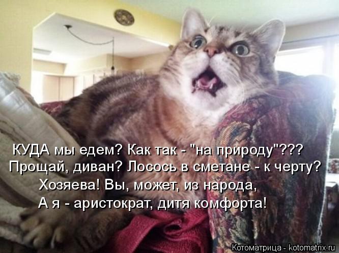 """Котоматрица: КУДА мы едем? Как так - """"на природу""""??? Прощай, диван? Лосось в сметане - к черту? Хозяева! Вы, может, из народа, А я - аристократ, дитя комфорта!"""