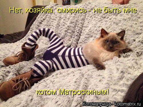 Котоматрица: Нет, хозяйка, смирись - не быть мне котом Матроскиным!
