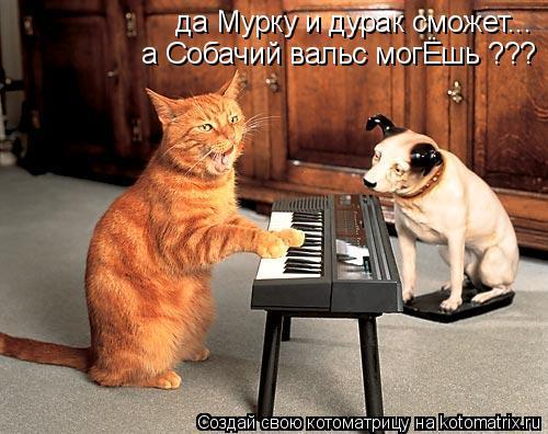 Котоматрица: да Мурку и дурак сможет... а Собачий вальс могЁшь ???