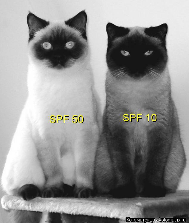 Котоматрица: SPF 10  SPF 50