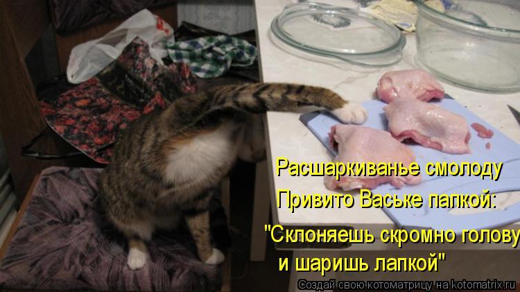 """Котоматрица: Расшаркиванье смолоду Привито Ваське папкой: """"Склоняешь скромно голову и шаришь лапкой"""""""