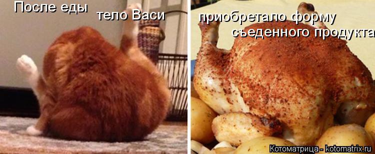 Котоматрица: После еды тело Васи приобретало форму съеденного продукта