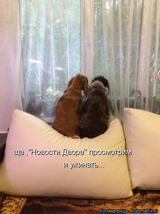 """Котоматрица: ща ,""""Новости Двора"""" просмотрим  и ужинать..."""