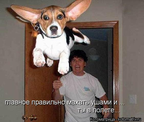 Котоматрица: главное правильно махать ушами и ... ты в полете...