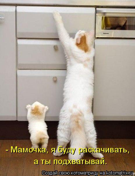 Котоматрица: - Мамочка, я буду раскачивать, а ты подхватывай.