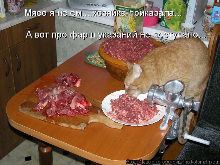 Котоматрица: Мясо я не ем....хозяйка приказала... А вот про фарш указаний не поступало...