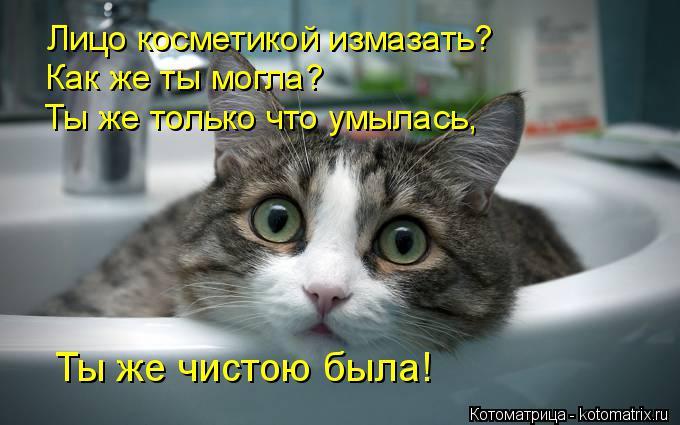 http://kotomatrix.ru/images/lolz/2014/11/17/kotomatritsa_WE.jpg
