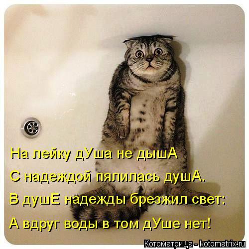 Котоматрица: На лейку дУша не дышА С надеждой пялилась душА. В душЕ надежды брезжил свет: А вдруг воды в том дУше нет!