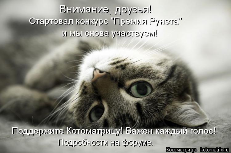 """Котоматрица: Внимание, друзья! Стартовал конкурс """"Премия Рунета""""  и мы снова участвуем! Поддержите Котоматрицу! Важен каждый голос! Подробности на форуме"""