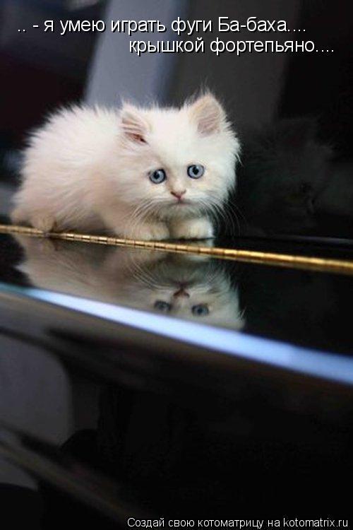 Котоматрица: .. - я умею играть фуги Ба-баха.... крышкой фортепьяно....