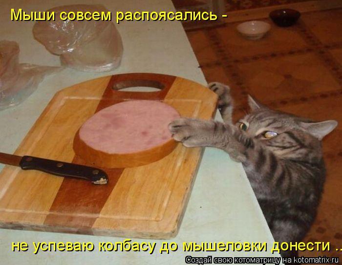Котоматрица: Мыши совсем распоясались - не успеваю колбасу до мышеловки донести ...