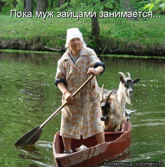 Котоматрица: Пока муж зайцами занимается...