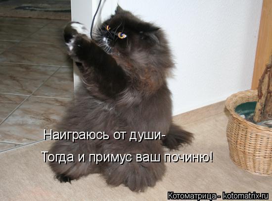 Котоматрица: Наиграюсь от души- Тогда и примус ваш починю!