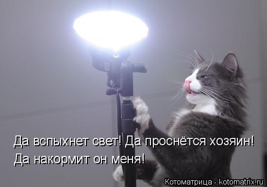 Котоматрица: Да вспыхнет свет! Да проснётся хозяин! Да накормит он меня!