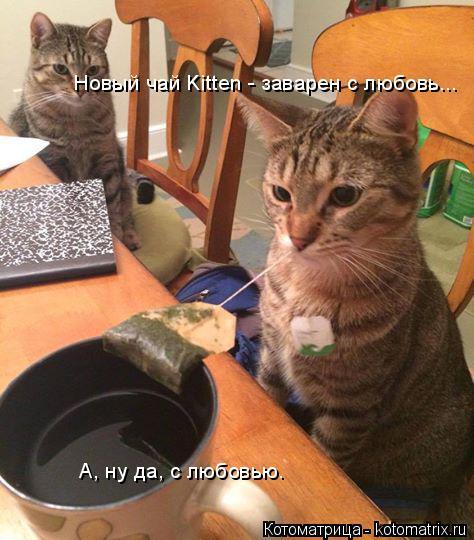 Котоматрица: Новый чай Kitten - заварен с любовь...  А, ну да, с любовью.