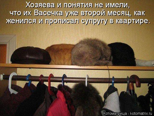 Котоматрица: Хозяева и понятия не имели,  что их Васечка уже второй месяц, как женился и прописал супругу в квартире.