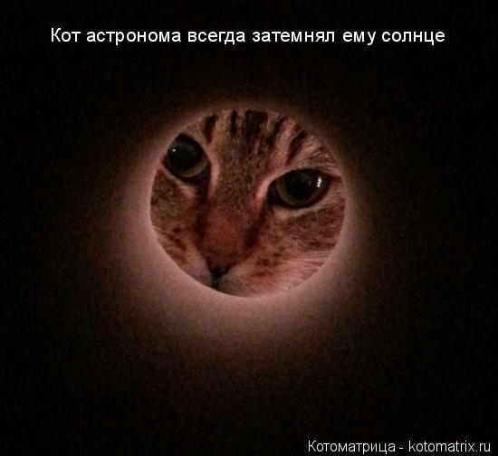 Котоматрица: Кот астронома всегда затемнял ему солнце