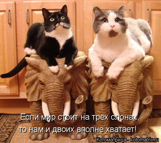 Котоматрица: Если мир стоит на трёх слонах, то нам и двоих вполне хватает!