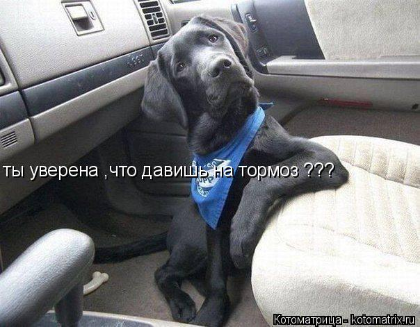 Котоматрица: ты уверена ,что давишь на тормоз ???