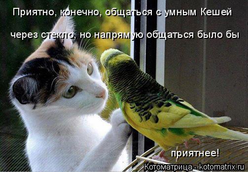 Котоматрица: Приятно, конечно, общаться с умным Кешей  через стекло, но напрямую общаться было бы приятнее!
