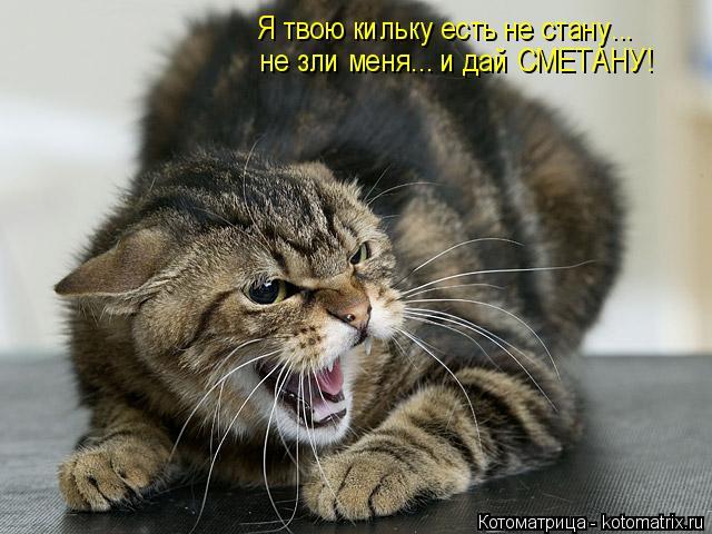 Котоматрица: Я твою кильку есть не стану... не зли меня... и дай СМЕТАНУ!