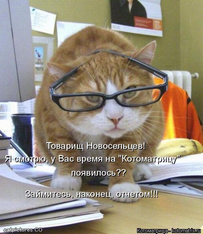 """Котоматрица: Товарищ Новосельцев!  Я смотрю, у Вас время на """"Котоматрицу"""" появилось?? Займитесь, наконец, отчетом!!!"""