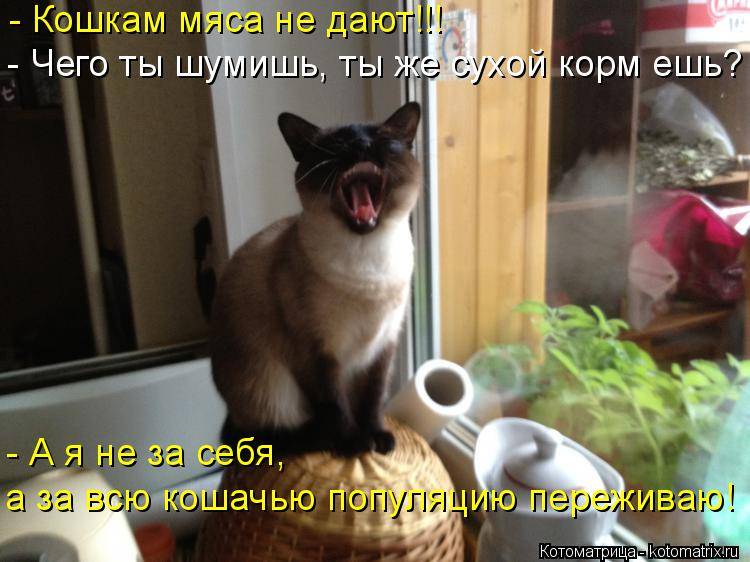 Котоматрица: - Кошкам мяса не дают!!! - Чего ты шумишь, ты же сухой корм ешь? - А я не за себя, а за всю кошачью популяцию переживаю!