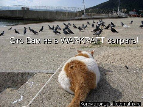 Котоматрица: Это Вам не в WARKRAFT сыграть!
