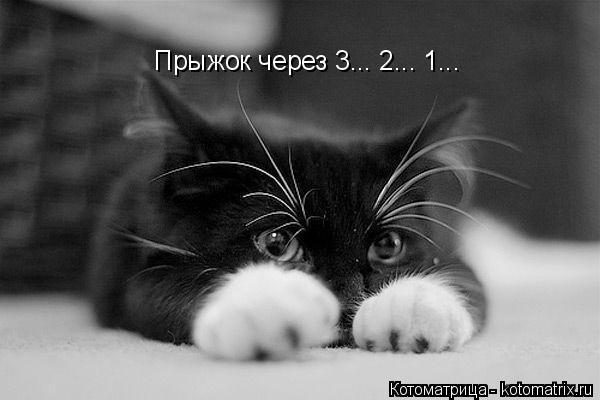 Котоматрица: Прыжок через 3... 2... 1...