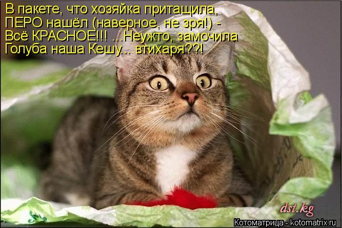 Котоматрица: В пакете, что хозяйка притащила, ПЕРО нашёл (наверное, не зря!) - Всё КРАСНОЕ!!! ...Неужто, замочила Голуба наша Кешу... втихаря??!