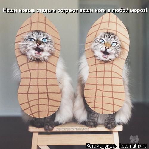 Котоматрица: Наши новые стельки согреют ваши ноги в любой мороз!