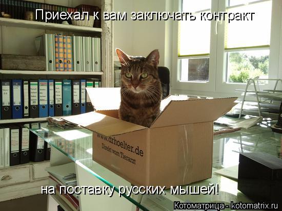Котоматрица: Приехал к вам заключать контракт на поставку русских мышей!