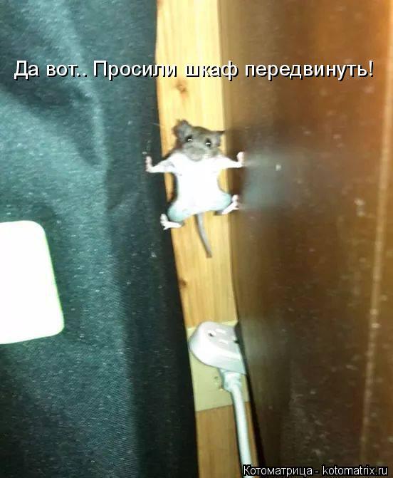 Котоматрица: Да вот.. Просили шкаф передвинуть!