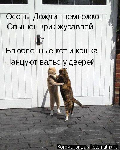 Котоматрица: Осень. Дождит немножко.  Слышен крик журавлей. Влюблённые кот и кошка Танцуют вальс у дверей